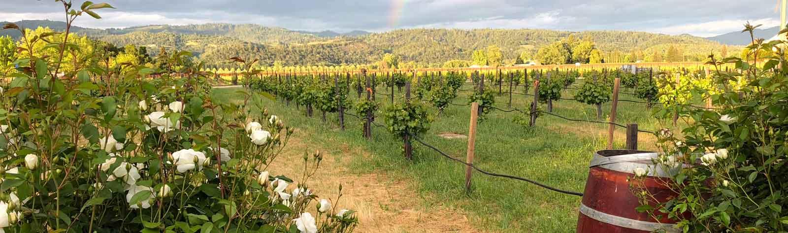 San Jose To Napa Wine Tour