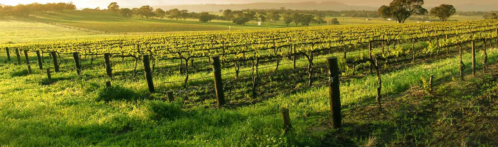 Wine Tours California